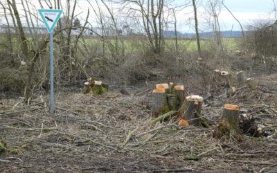 Naturdenkmal bei Altenhausen durch Motorfliegerclub zerstört
