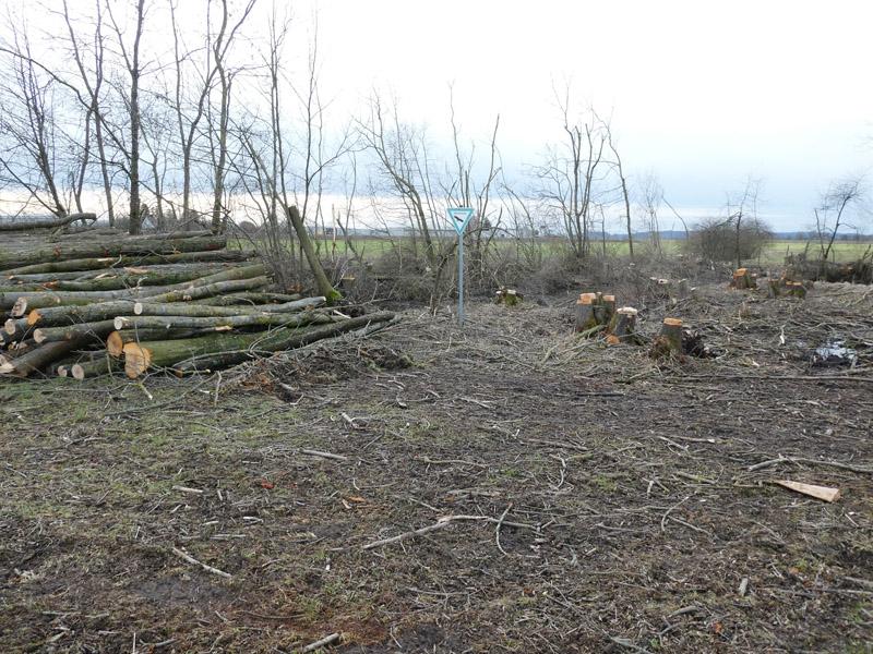 Bericht Haller Tagblatt v. 01. März 2021: Vorwurf: Naturdenkmal vollständig abgeholzt