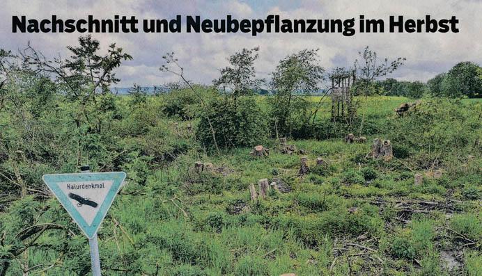 Bericht im Haller Tagblatt vom 9. Juni 2021: Nachschnitt und Neubepflanzung im Herbst